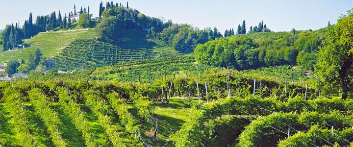 sorelle-bronca-wijngaarden
