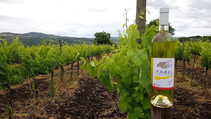 wijngaard-Parel